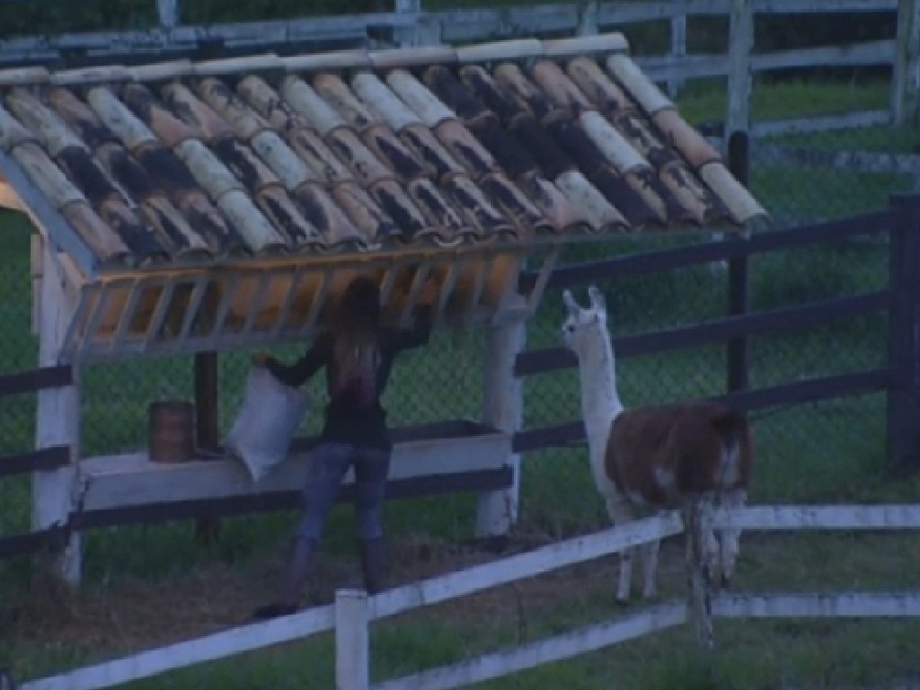 23.jul.2013 - Andressa cuida das lhamas na manhã desta terça-feira