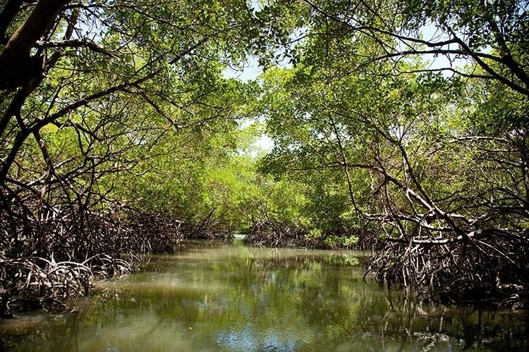 Gruta do Mangue - um corredor formado pela vegetação fechada de manguezais - é conhecida no passeio pelo Canal de Santa Cruz, em Itamaracá