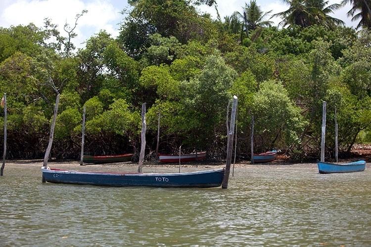 Vegetação de manguezais margeia Canal de Santa Cruz, entre a Ilha de Itamaracá e a Coroa do Avião