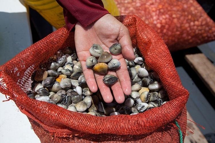 Sacos de mariscos colhidos nos extensos bancos de areia da Coroa do Avião, em um dia de trabalho