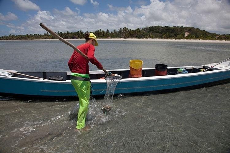 Pescadora aproveita enquanto maré ainda não subiu para recolher mariscos na Coroa do Avião, em Itamaracá