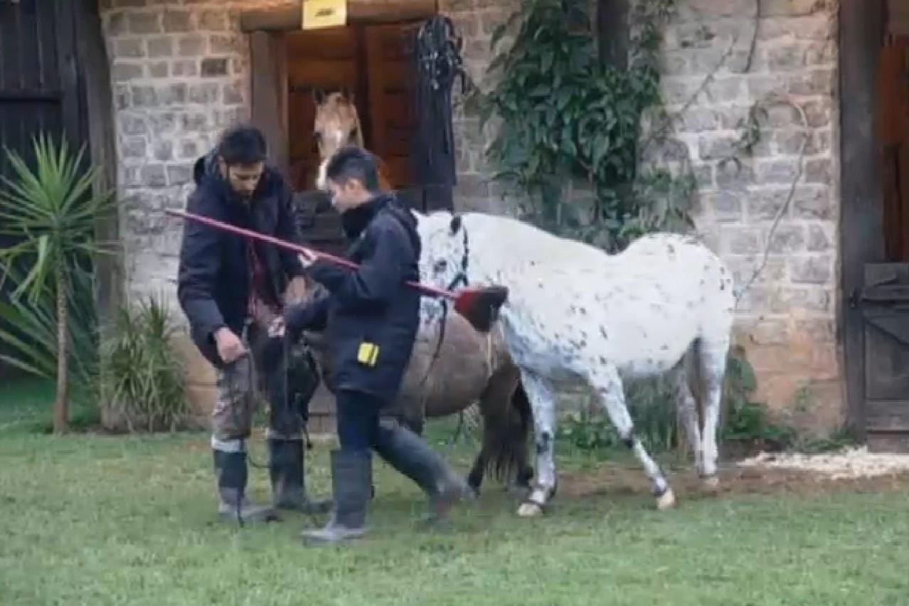 25.jul.2013 - Yudi ajuda Beto Malfacini com os cavalos