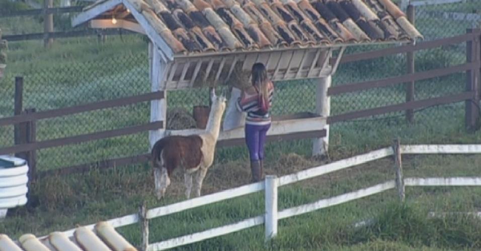 28.jul.2013 - Andressa Urach cuida das Lhamas