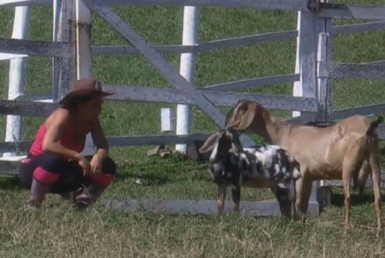 30.jul.2013 - Scheila Carvalho brinca com as cabras