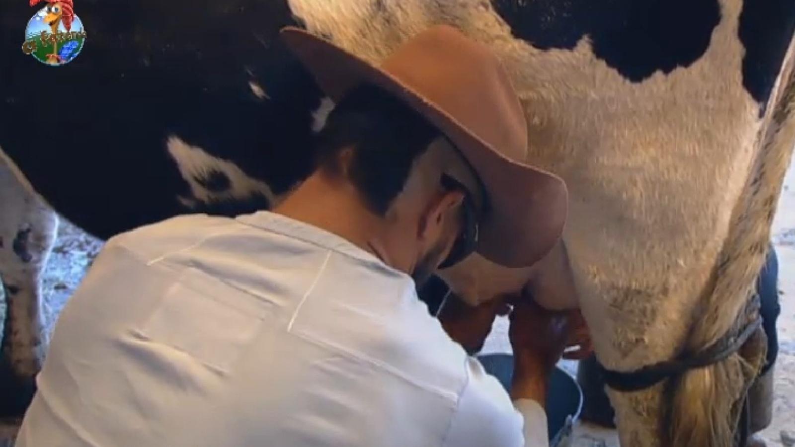 2.ago.2013 - Fazendeiro da semana, Beto Malfacini tira o leite da vaca