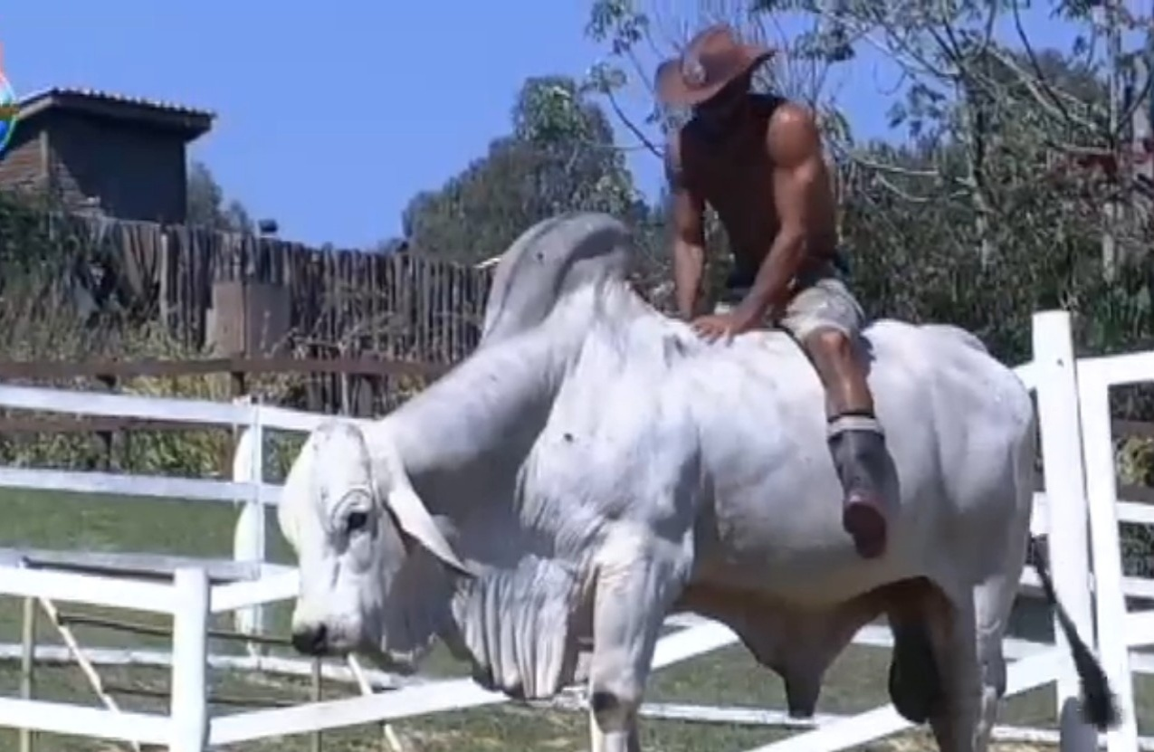 03.ago.2013 - Beto Malfacini monta no touro Rubinho