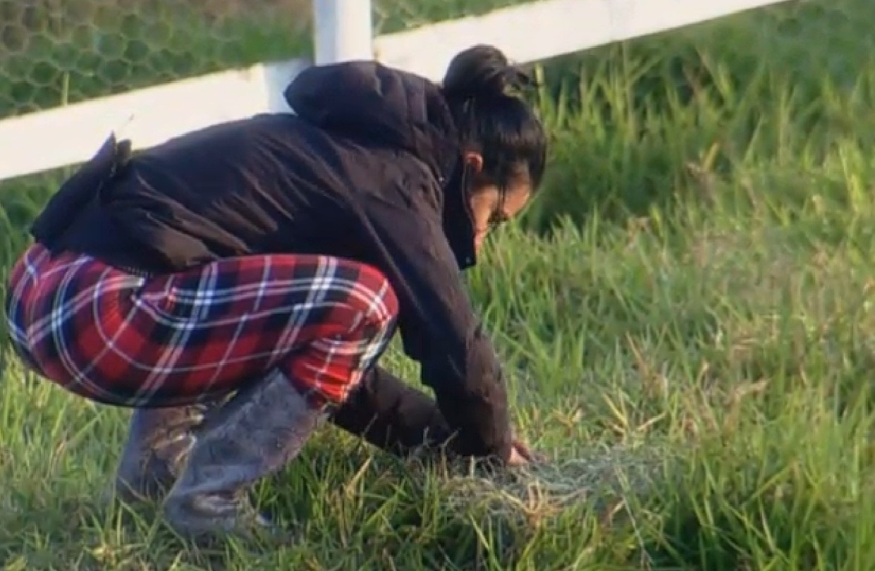8.ago.2013 - Scheila Carvalho encontra um ninho de passarinho