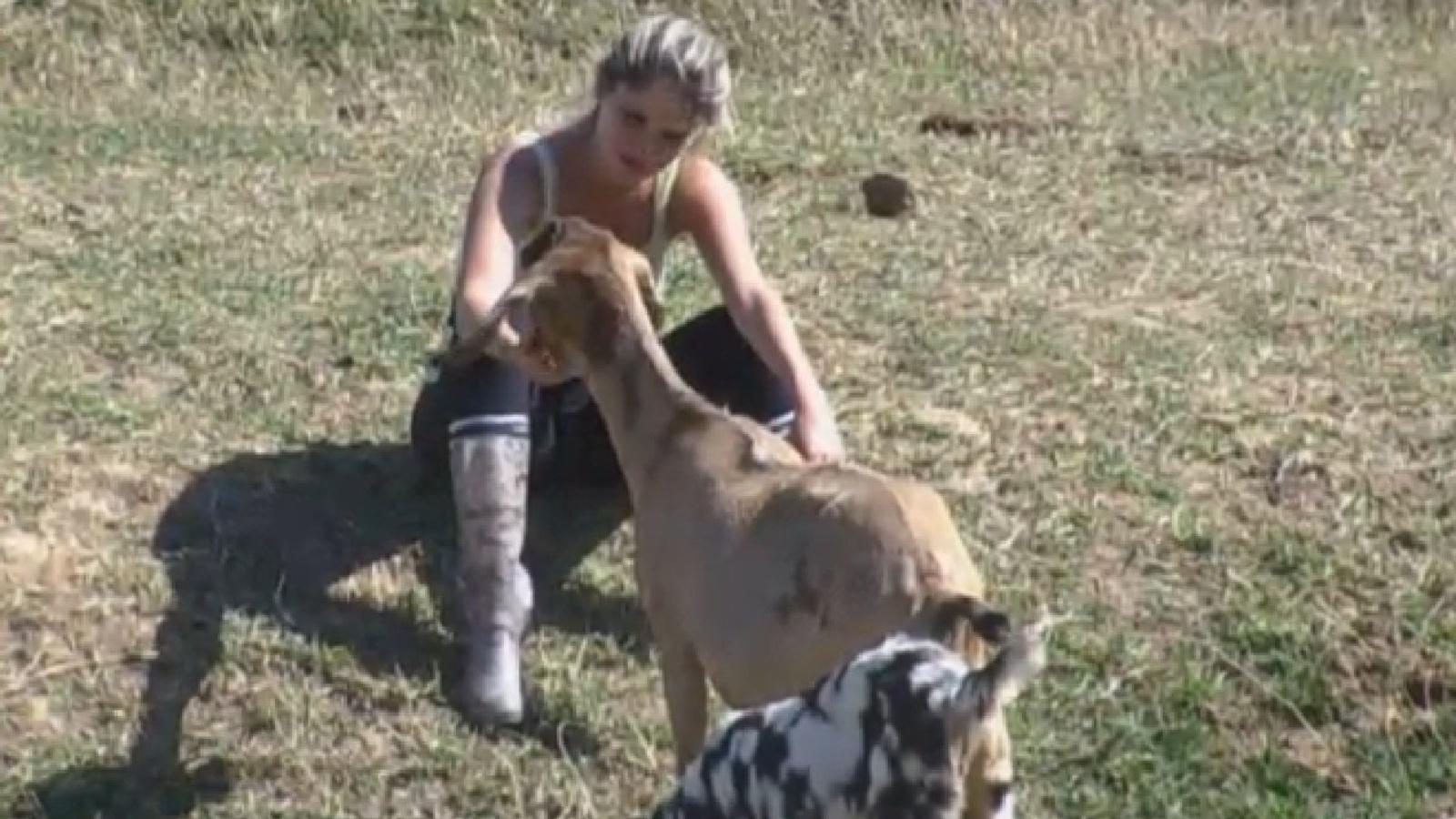 20.ago.2013 - Bárbara Evans faz carinho nas cabras na manhã desta terça-feira