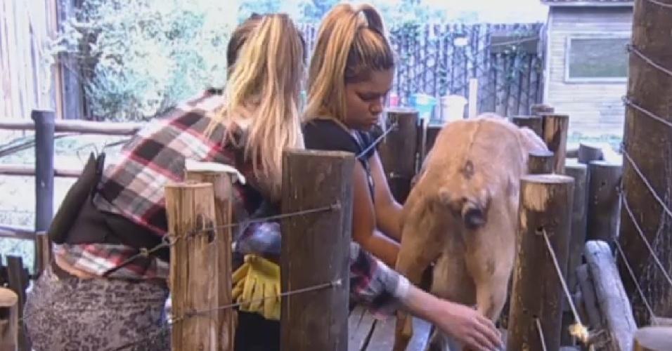 26.ago.2013 - Mulher Filé e Andressa Urach  tiram leite da cabra