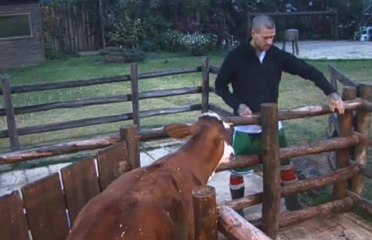 27.ago.2013 - Após levar várias cabeçadas do bezerro, Mateus descobre técnica para prender o filhote
