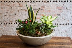 Monte o vaso das sete ervas e atraia bons fluidos para a casa - Edna Froes/ Divulgação