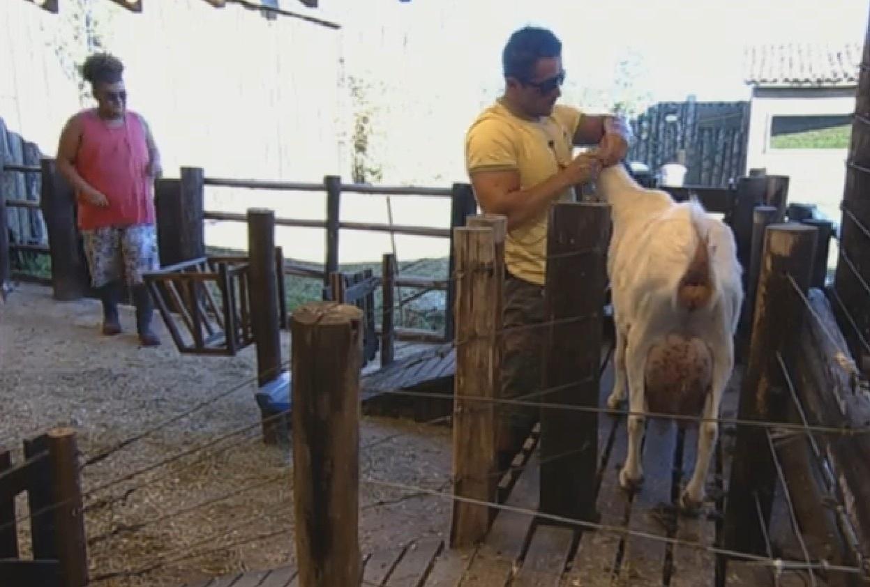 6.set.2013 - Após reclamação de Oliver, fazendeiro Gominho ajudou peão a cuidar das cabras