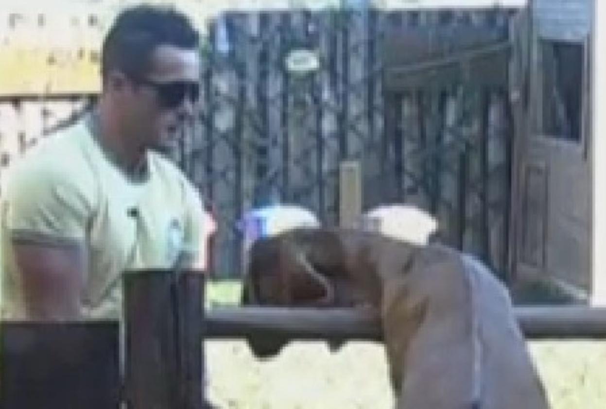 6.set.2013 - Ao acordar, Oliver cuidou das cabras e dos cabritos da fazenda