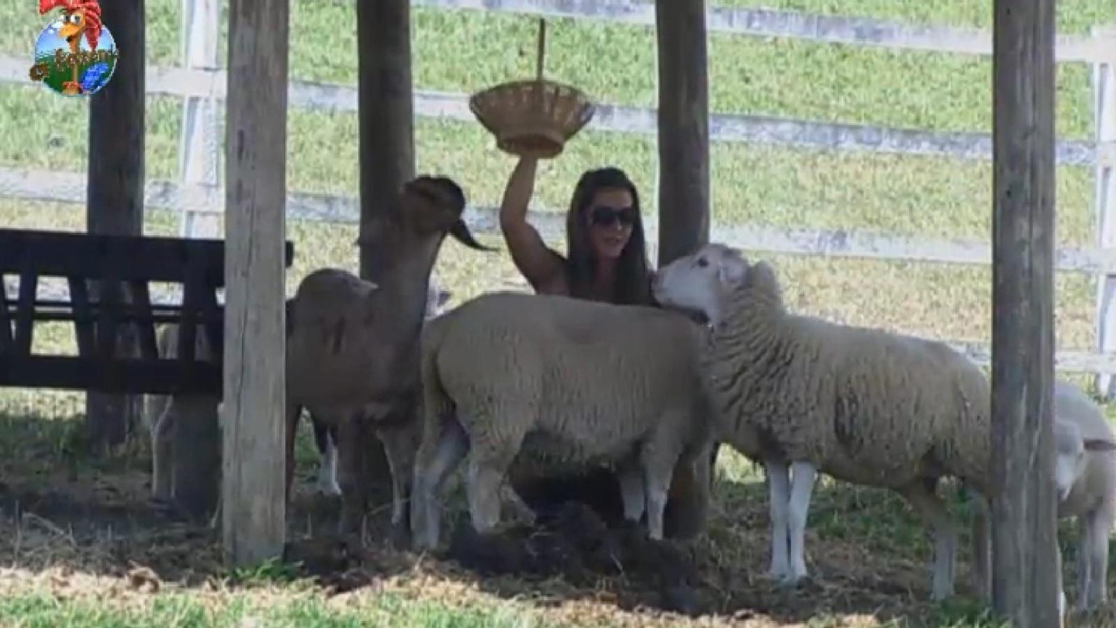 6.set.2013 - Denise Rocha brinca com as ovelhas