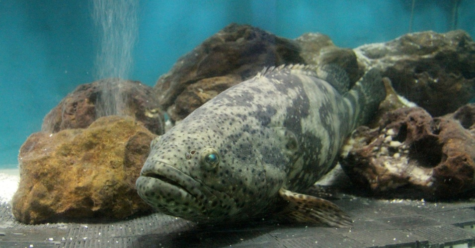 Programa divertido para quem viaja com crianças, o Aquário Natal, que fica na praia da Redinha em Natal (RN), preserva cerca de 60 espécies de peixes de água doce e salgada