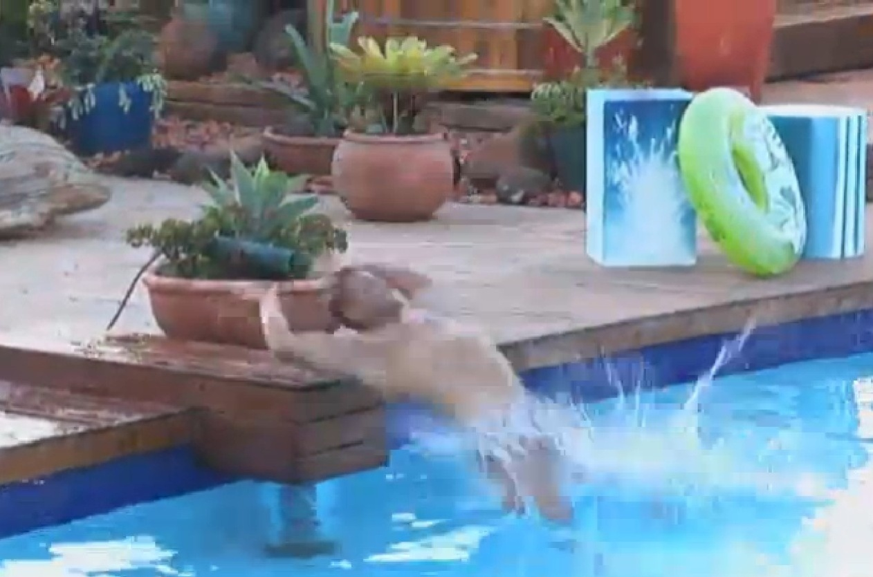13.set.2013 - Marcos Oliver se joga na água