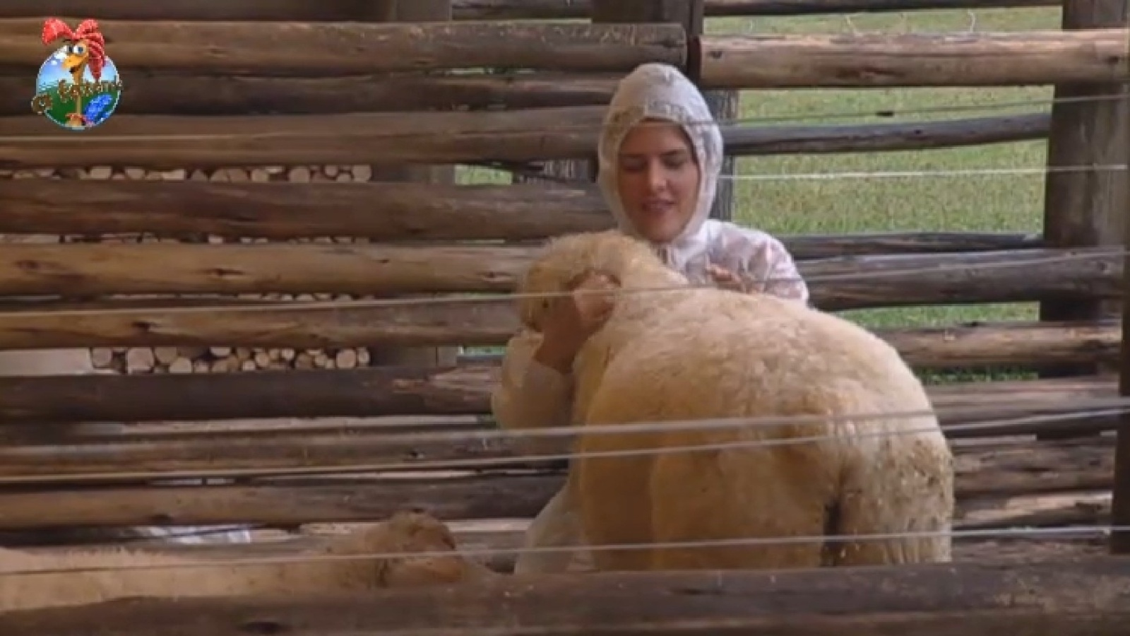 17.set.2013 - Denise Rocha brinca com as ovelhas na manhã desta terça-feira