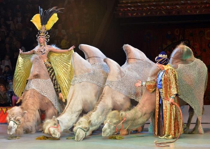 """19.set.2013 - Camelos adestrados fazem parte do novo show do Circo Nacional da Ucrânia, """"Caravana as Maravilhas"""""""