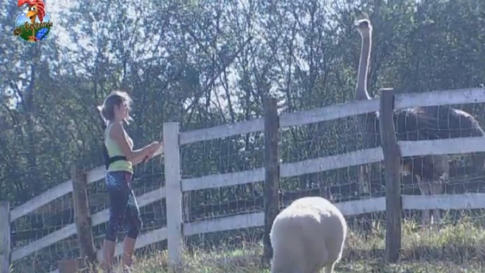 21.set.2013 - Bárbara Evans enfrenta avestruz na manhã deste sábado