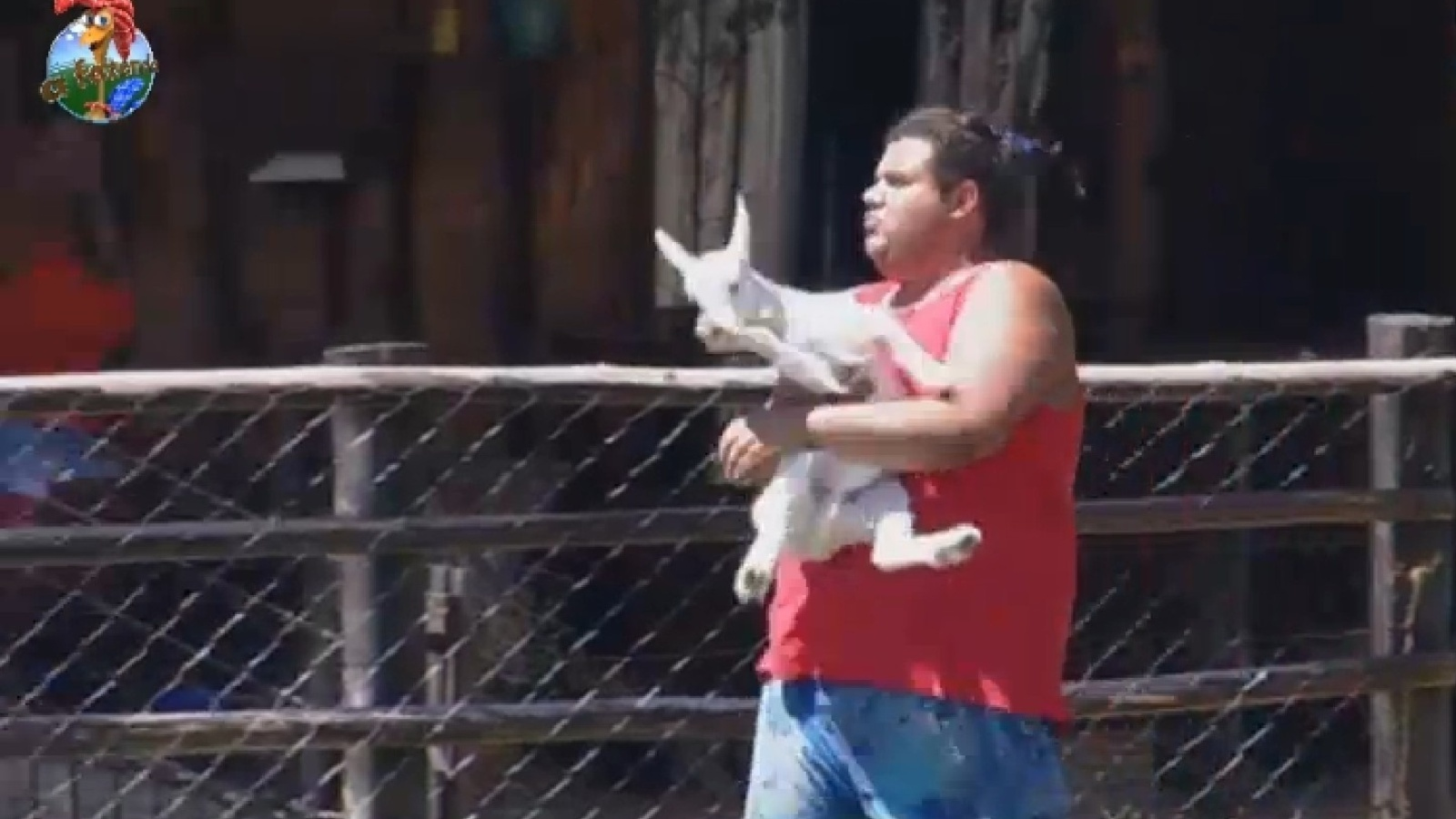 21.set.2013 - Gominho leva cabritinho para primeiro passeio pela fazenda