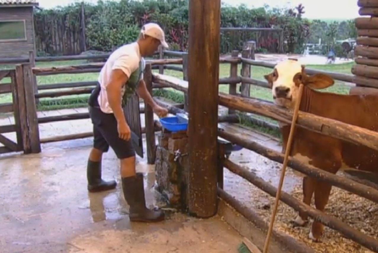 23.set.2013 - Marcos Oliver cuidando da vaca