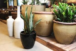 """Cultive a espada-de-são-jorge para embelezar e """"purificar"""" a casa - Reinaldo Canato/ UOL"""