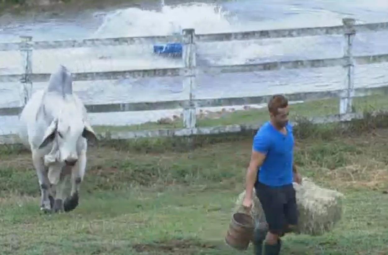 24.set.2013 - Oliver carregou feno para alimentar animais