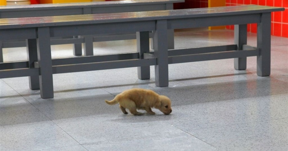 """Em """"Chiquititas"""", crianças do orfanato adotam cachorra e a chamam de Pipoca"""