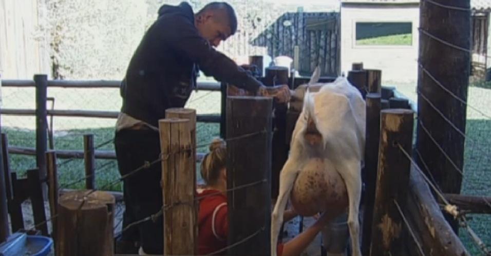 26.set.2013 - Bárbara teve ajuda de Mateus para tirar leite da cabra
