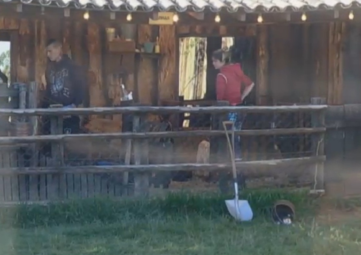 26.set.2013 - Mateus e Bárbara tiveram dificuldade para cuidar das cabras pela manhã