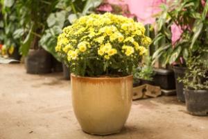 Faça uma hortinha aromática e decorativa em uma panela de ágata - Edna Froes/ Divulgação