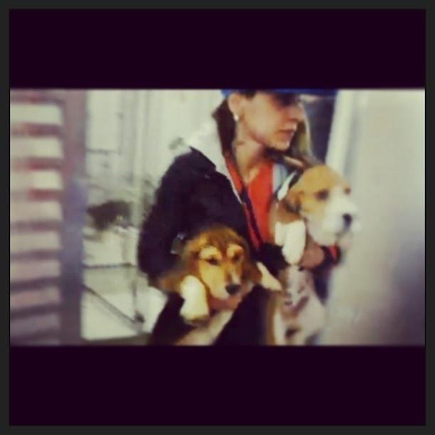 Vanessa Mesquita participou da ação que levou cachorros beagle do Instituto Royal, em São Roque (SP)