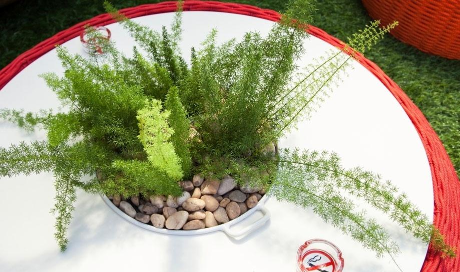 """14.jan.2014 - Uma planta enfeita a mesa na varanda da parte externa do """"BBB14"""""""