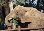 Zool�gico nos EUA vai construir 'spa' para elefantes gordinhos; veja fotos