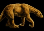 Paleont�logo encontra f�sseis de esp�cie de pregui�a extinta h� 11 mil anos