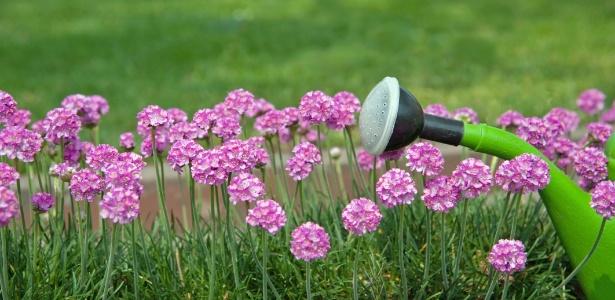 plantas de jardim lista: precisa ser maior, mas o ideal é aguar as plantas na parte da manhã