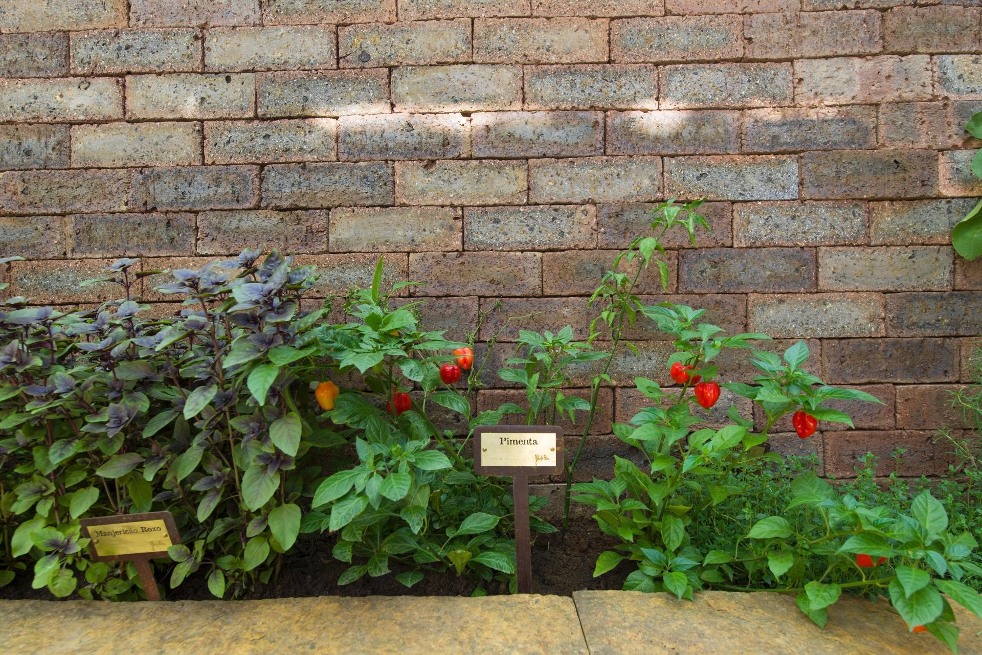 Charme e frescor da horta de temperos ou do cantinho verde - No jardim de inverno da Casa de Campo, projetada pelo arquiteto Sig Bergamin, os temperos estão em vasos de diferentes tamanhos e também ocupam o canteiro (foto)