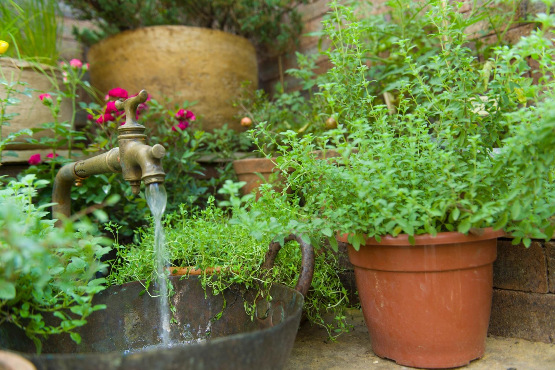 Charme e frescor da horta de temperos ou do cantinho verde - No jardim de inverno da Casa de Campo, projetada pelo arquiteto Sig Bergamin, os temperos estão em vasos de diferentes tamanhos (foto) e também ocupam o canteiro