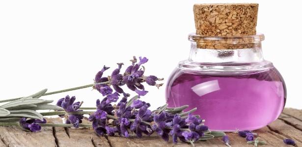 Delicadas e bonitas lavandas perfumam e enfeitam a casa - Planta lavanda cuidados ...