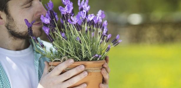 Lavandas são fáceis de ser cultivadas e podem ser plantadas em vasos