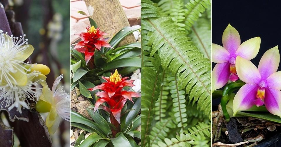 Bromélias, samambaias e orquídeas enfeitam o jardim em troncos e