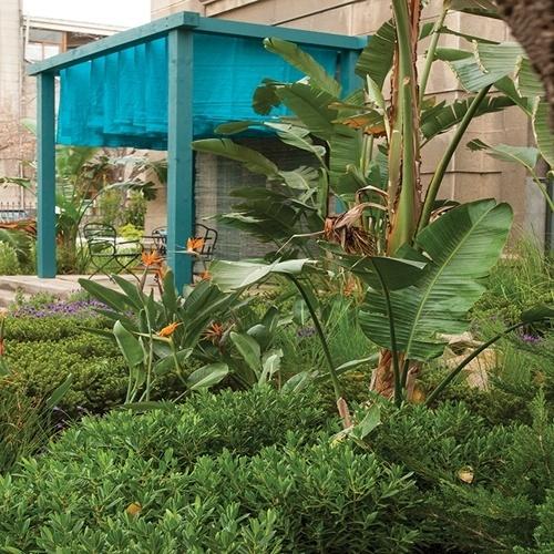 As espécies de clima temperado marcam o jardim