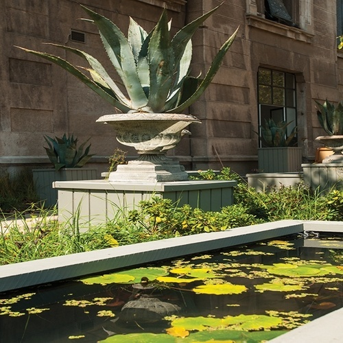 Combinadas ao espelho d'água, plantas suculentas do gênero Agave, em vasos de desenho clássico, dão um toque imponente ao jardim do ambiente