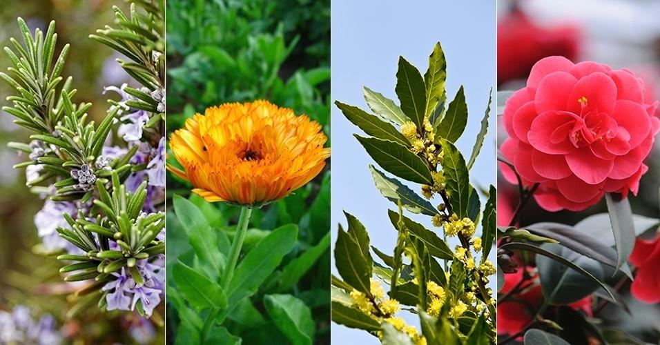 arvore manaca jardim:Leve o aroma do campo para casa com manacá, jasmim, hortelã e cia