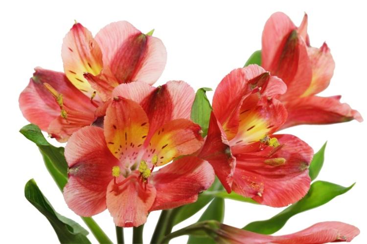 Veja 25 plantas com as cores de 2015 para atualizar a decoração da