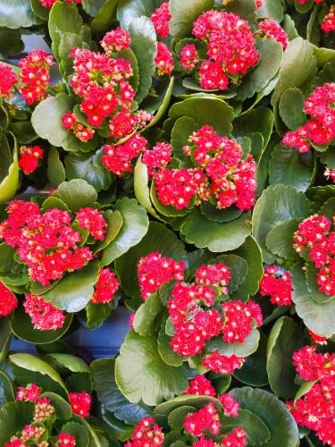 Veja 20 suculentas e cactos 39 porretas 39 para enfrentar o for Lista de plantas de sombra