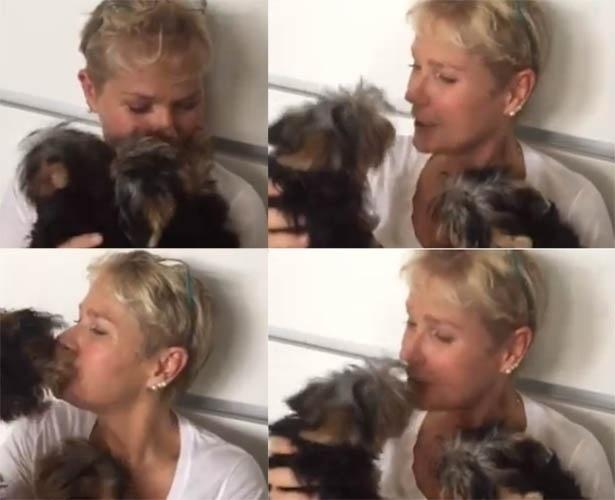 19.mar.2015- Xuxa apresentou seus novos cachorrinhos da raça yorkshire em vídeo publicado no seu Facebook, nesta quinta-feira (19). A apresentadora ganha muitas lambidas dos bichinhos de estimação: