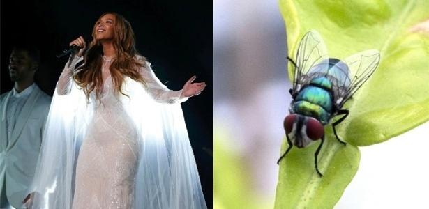 Uma mosca foi batizada de Beyoncé por ter a barriga dourada, lembrando alguns dos figurinos da cantora