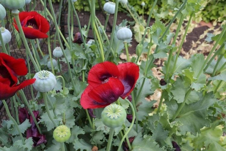 turística, castelo inglês tem jardim venenoso  Fotos  UOL Viagem
