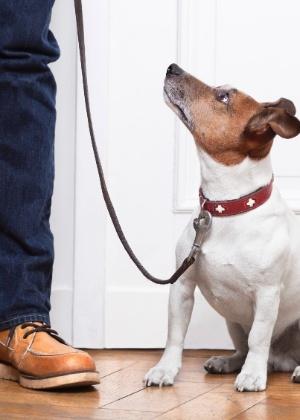 cao-na-guia-de-passeio-1430848649922_300x420 Mudança de lar sem estresse: veja como adaptar cães e gatos à nova casa
